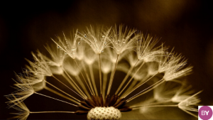 El dolor y El placer a terapia